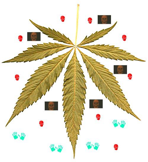 WHO Stuien über Kifer Cannabis